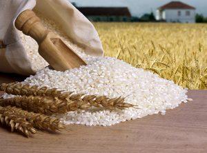 trigo-produtos