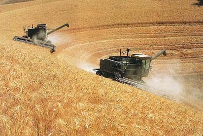Chuvas podem limitar produção de trigo da Austrália em 2016