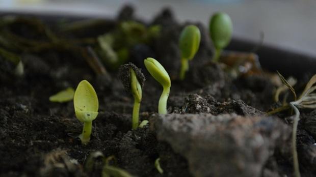 Cinco coisas importantes sobre a revitalização da igreja que a maioria dos líderes perde, parte 2